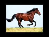 Про лошадей! Самые грациозные животные!  Сила,мужество , гордость и свобода! Всё в одном видео)
